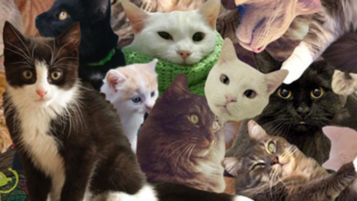 kitties_large