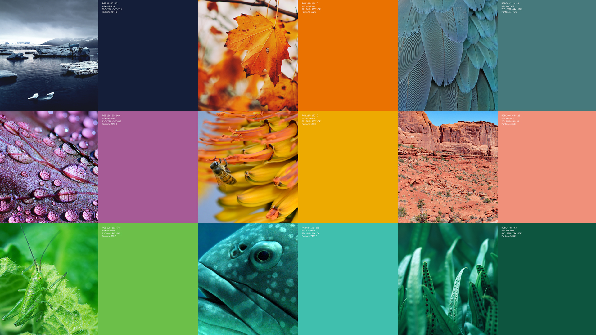 IUCN_Brand colours_Reference swatch_With codes